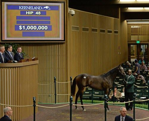 Keeneland Sales horse